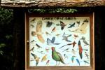 Gleichzeitig schützt man Vögel