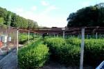 Überdachbare Teebäume