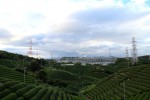 Teefelder mit Hintergrundenergie